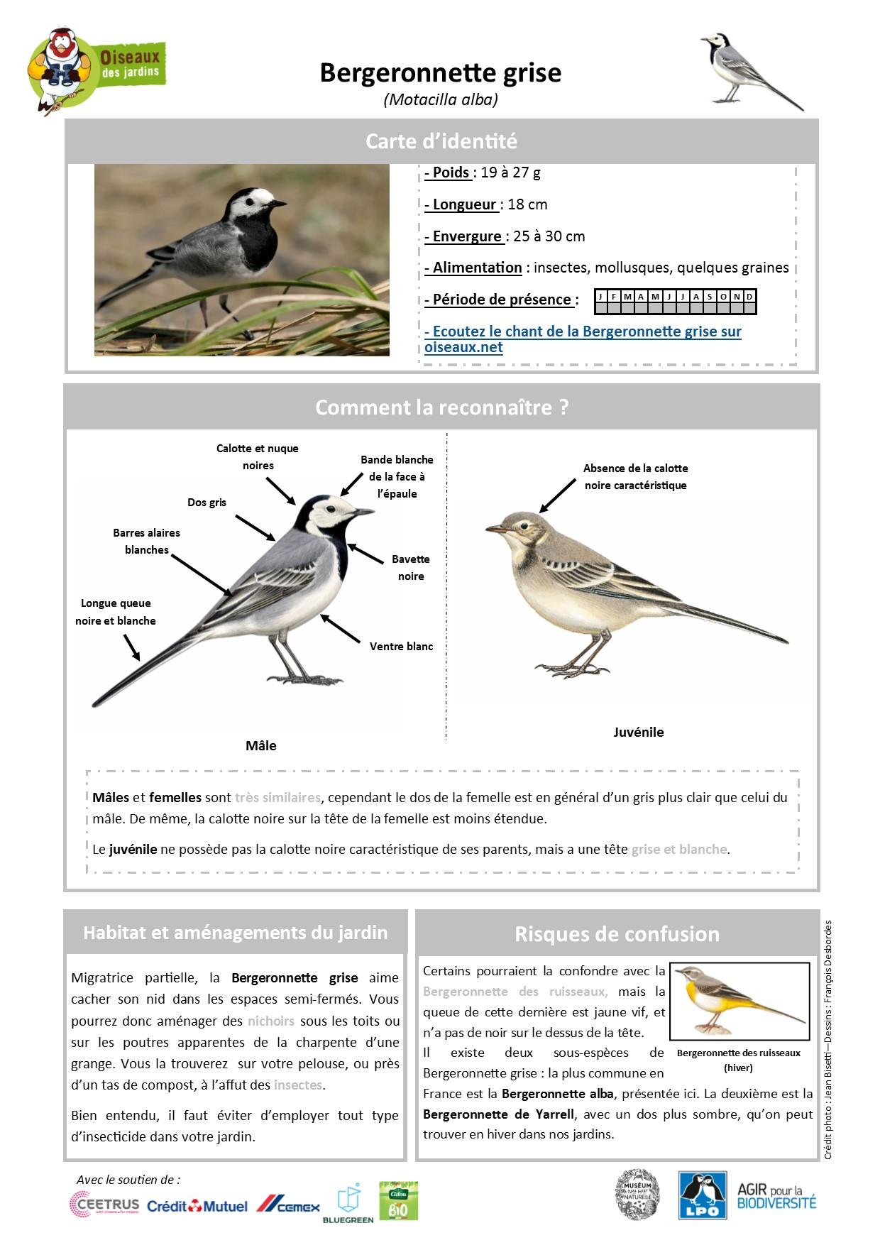 https://cdnfiles2.biolovision.net/www.oiseauxdesjardins.fr/userfiles/Fichesespces/FicheespceBG.pdf