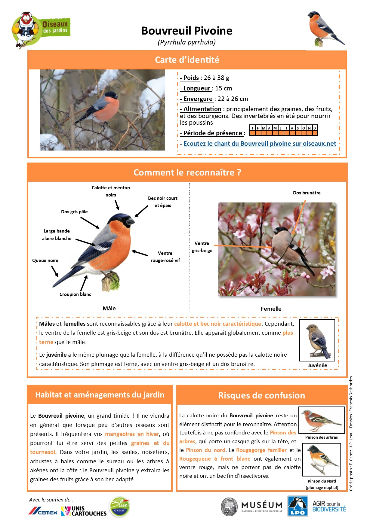 https://cdnfiles2.biolovision.net/www.oiseauxdesjardins.fr/userfiles/Fichesespces/FicheespceBP.pdf