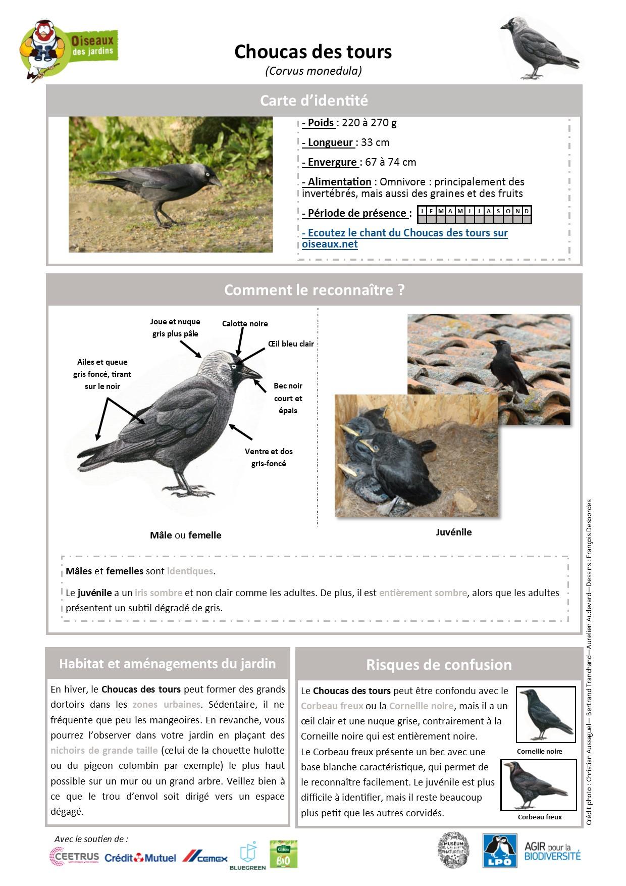 https://cdnfiles2.biolovision.net/www.oiseauxdesjardins.fr/userfiles/Fichesespces/FicheespceCDT.pdf