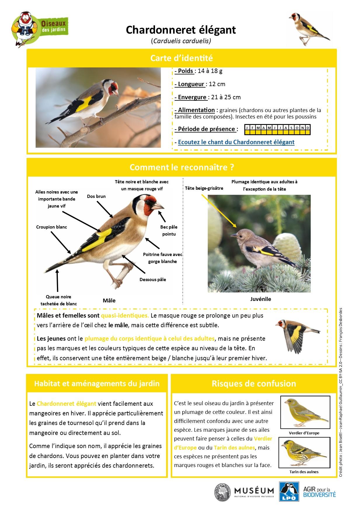 https://cdnfiles2.biolovision.net/www.oiseauxdesjardins.fr/userfiles/Fichesespces/FicheespceCEG.pdf