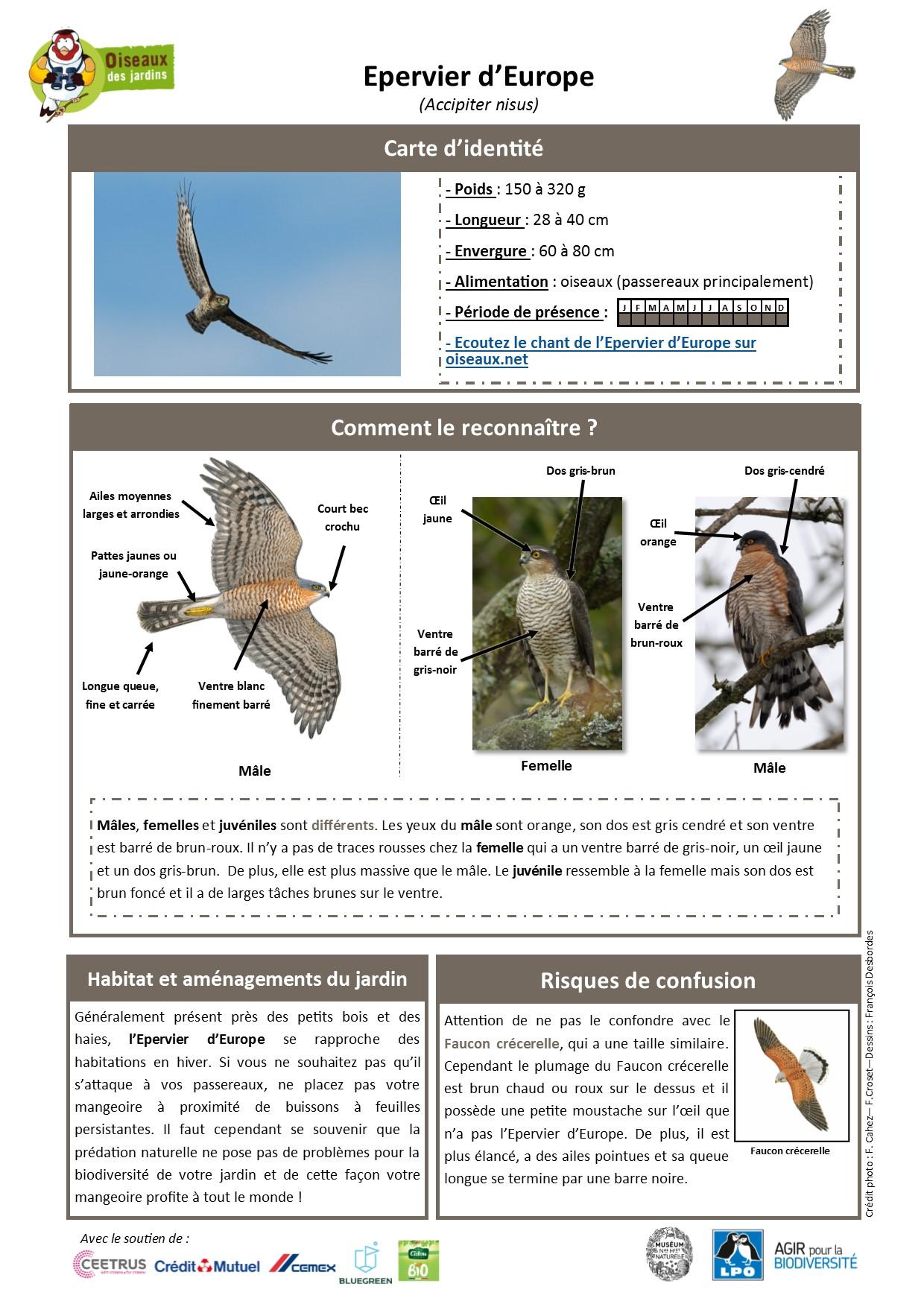 https://cdnfiles2.biolovision.net/www.oiseauxdesjardins.fr/userfiles/Fichesespces/FicheespceEE.pdf