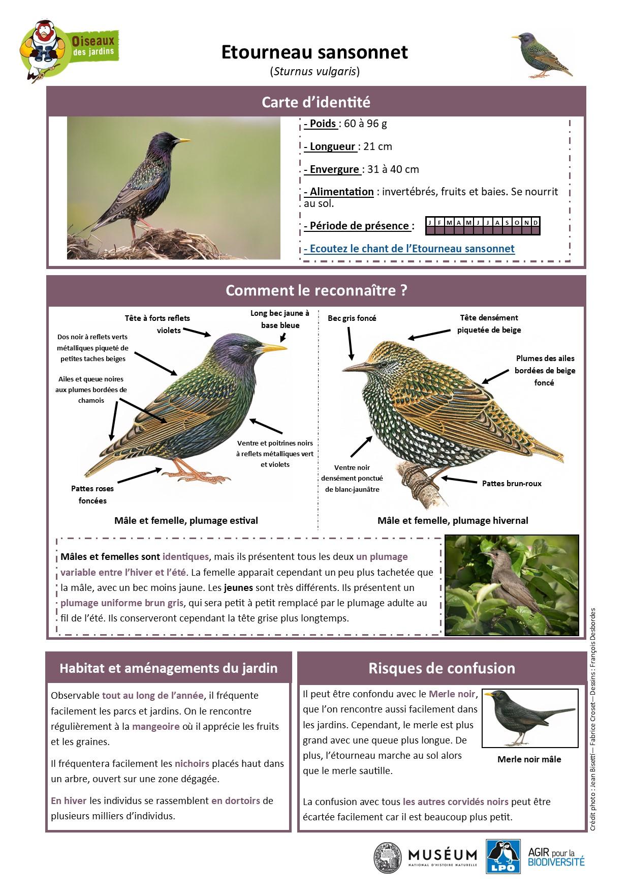 https://cdnfiles2.biolovision.net/www.oiseauxdesjardins.fr/userfiles/Fichesespces/FicheespceETScorrige.jpg