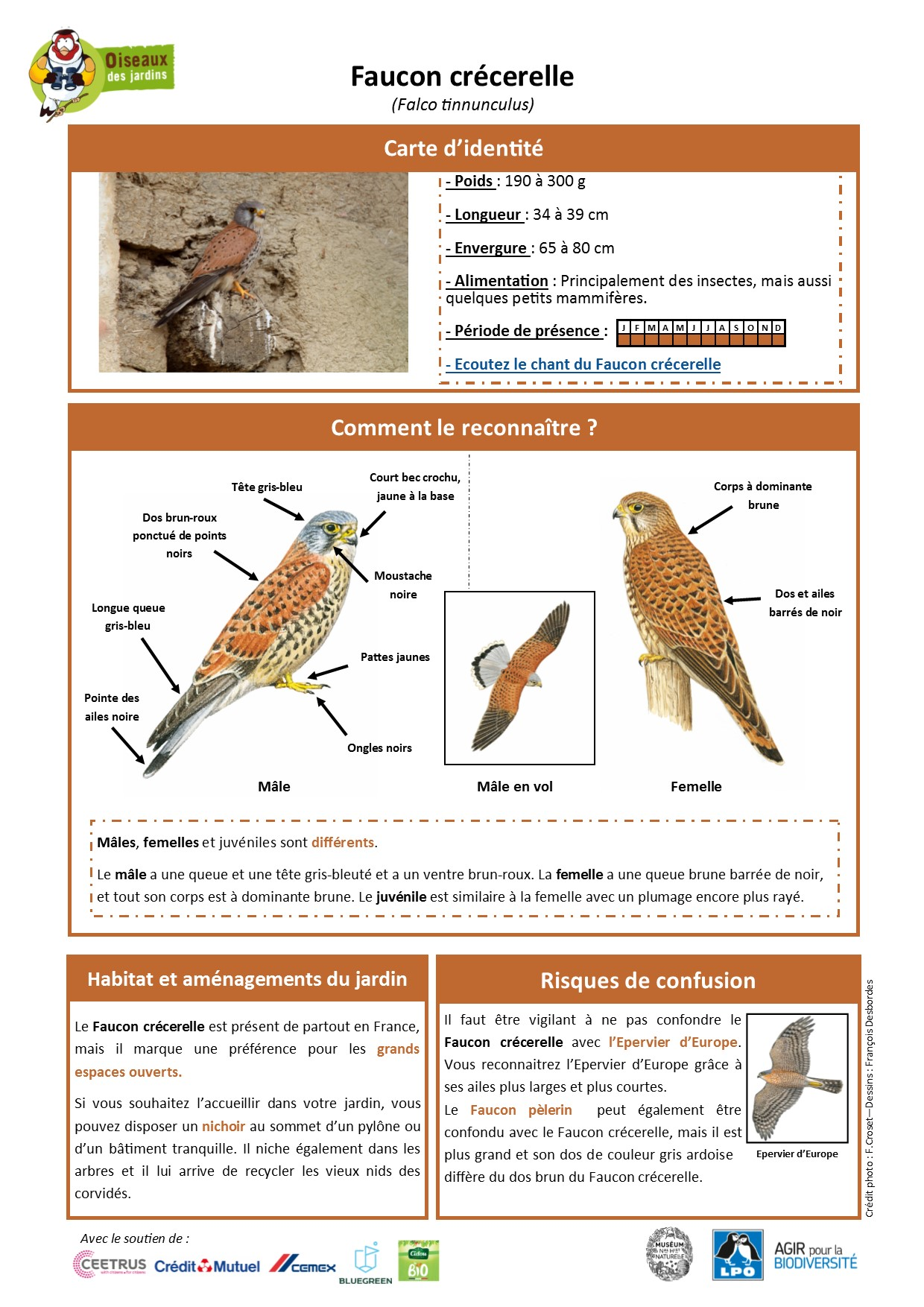 https://cdnfiles2.biolovision.net/www.oiseauxdesjardins.fr/userfiles/Fichesespces/FicheespceFCv2.pdf