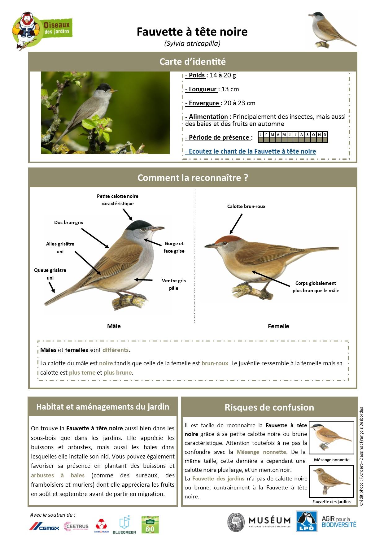 https://cdnfiles2.biolovision.net/www.oiseauxdesjardins.fr/userfiles/Fichesespces/FicheespceFTN.jpg