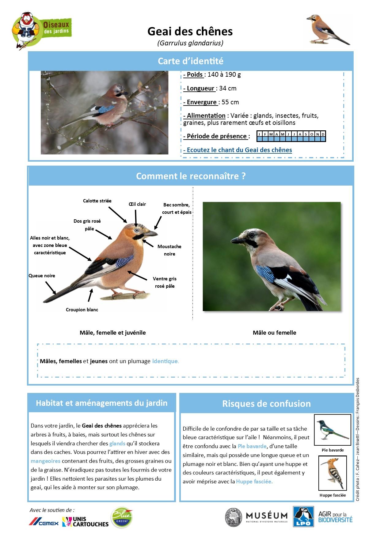 https://cdnfiles2.biolovision.net/www.oiseauxdesjardins.fr/userfiles/Fichesespces/FicheespceGDC.pdf