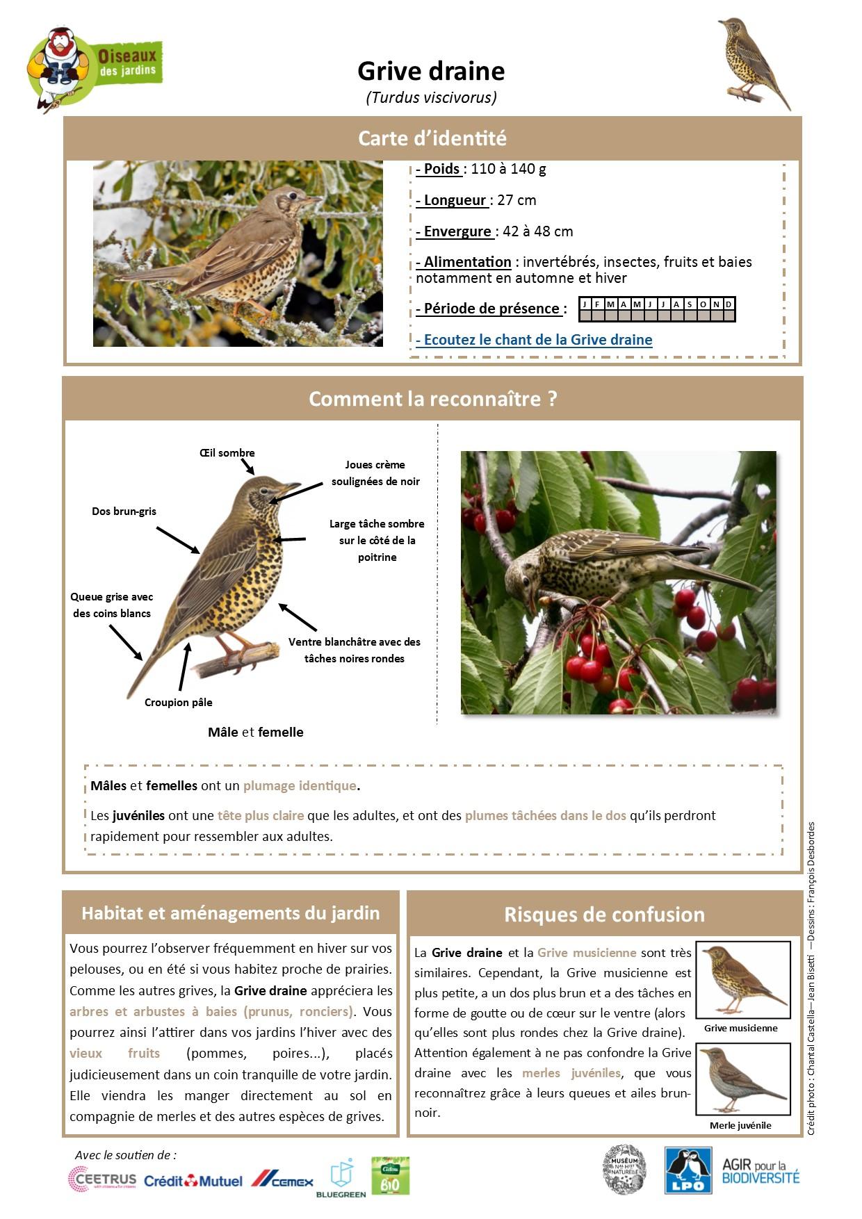 https://cdnfiles2.biolovision.net/www.oiseauxdesjardins.fr/userfiles/Fichesespces/FicheespceGDv2EC.pdf