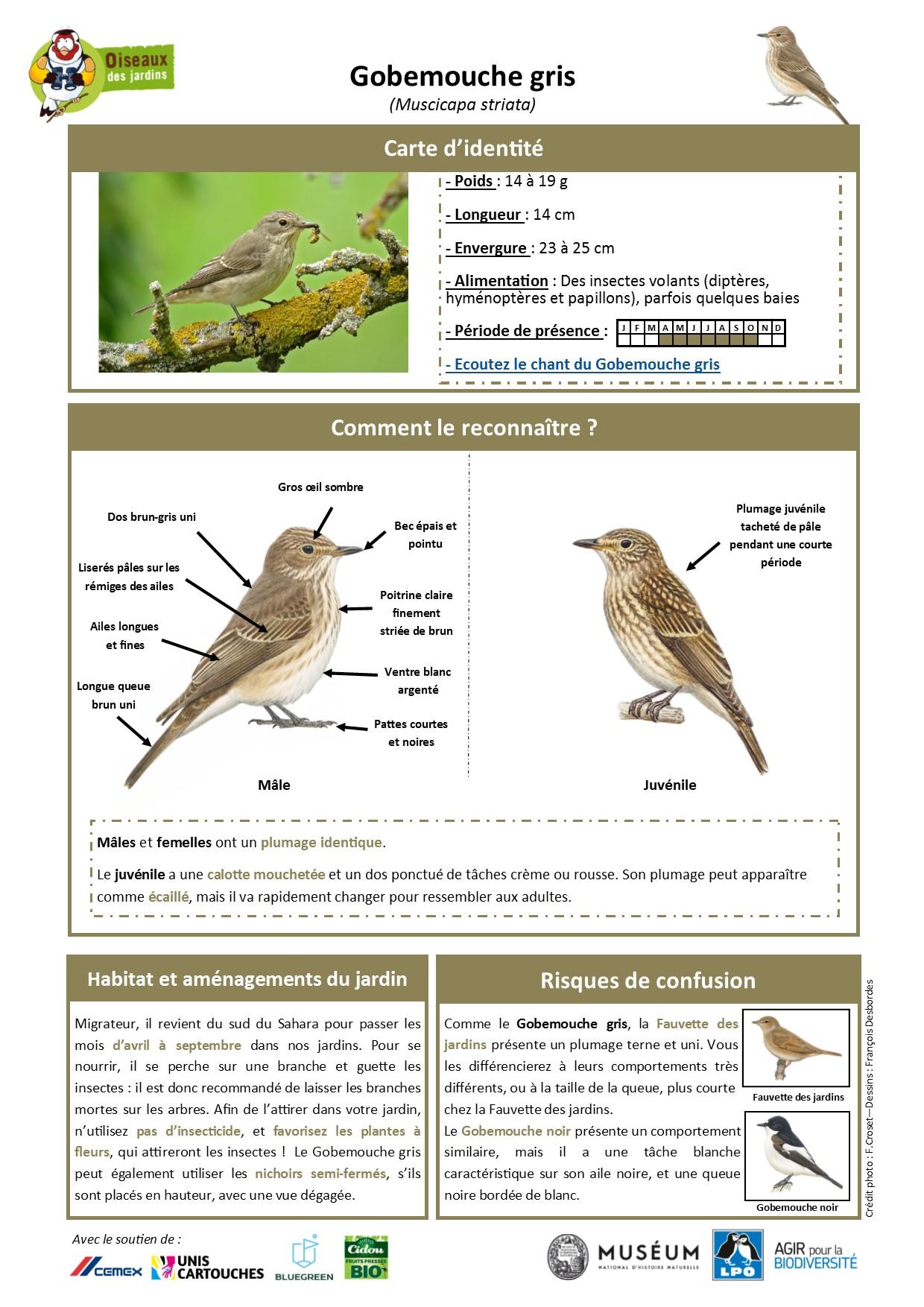 https://cdnfiles2.biolovision.net/www.oiseauxdesjardins.fr/userfiles/Fichesespces/FicheespceGG.jpg