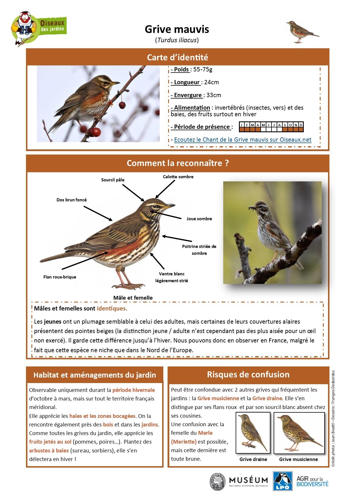 https://cdnfiles2.biolovision.net/www.oiseauxdesjardins.fr/userfiles/Fichesespces/FicheespceGMA.pdf