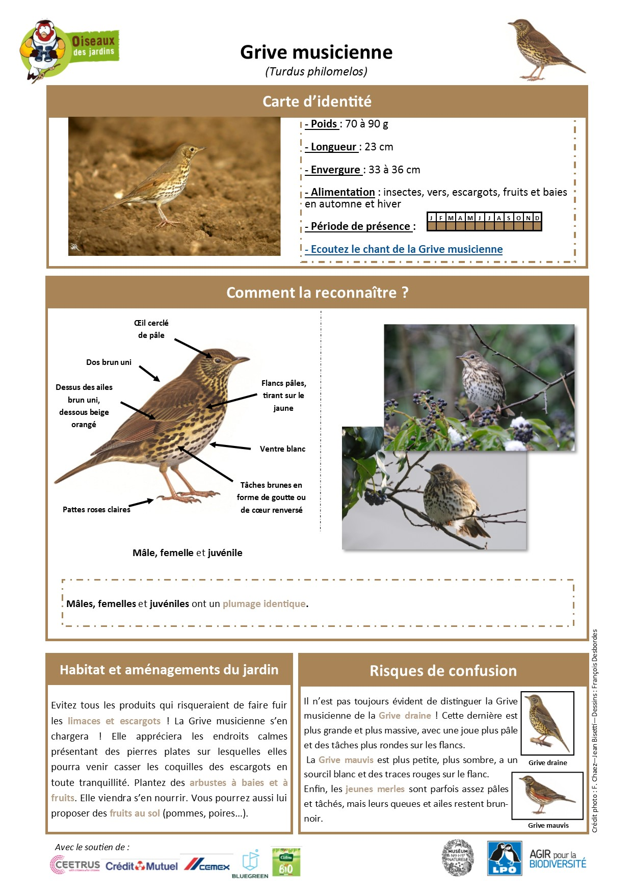 https://cdnfiles2.biolovision.net/www.oiseauxdesjardins.fr/userfiles/Fichesespces/FicheespceGMcpsv2.pdf