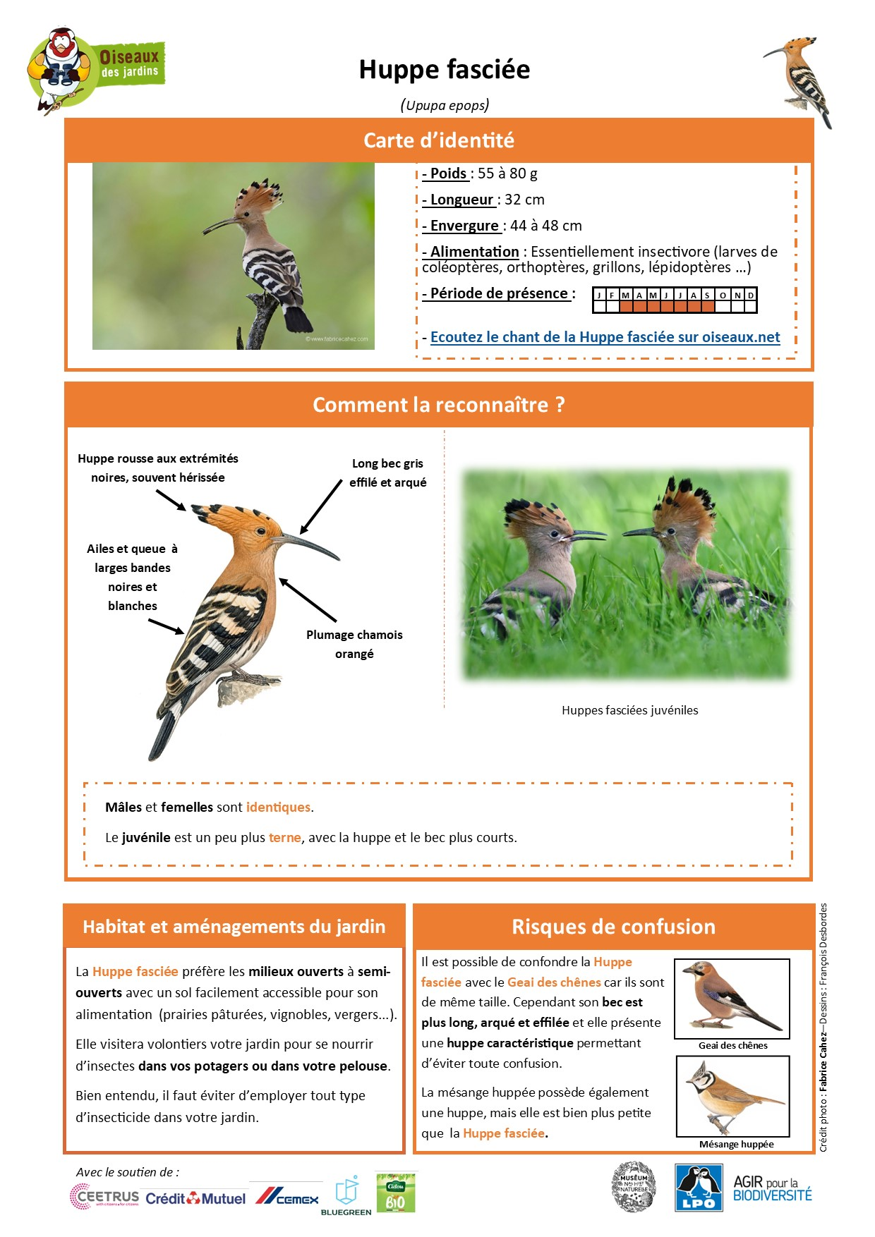 https://cdnfiles2.biolovision.net/www.oiseauxdesjardins.fr/userfiles/Fichesespces/FicheespceHFA-Compress.jpg