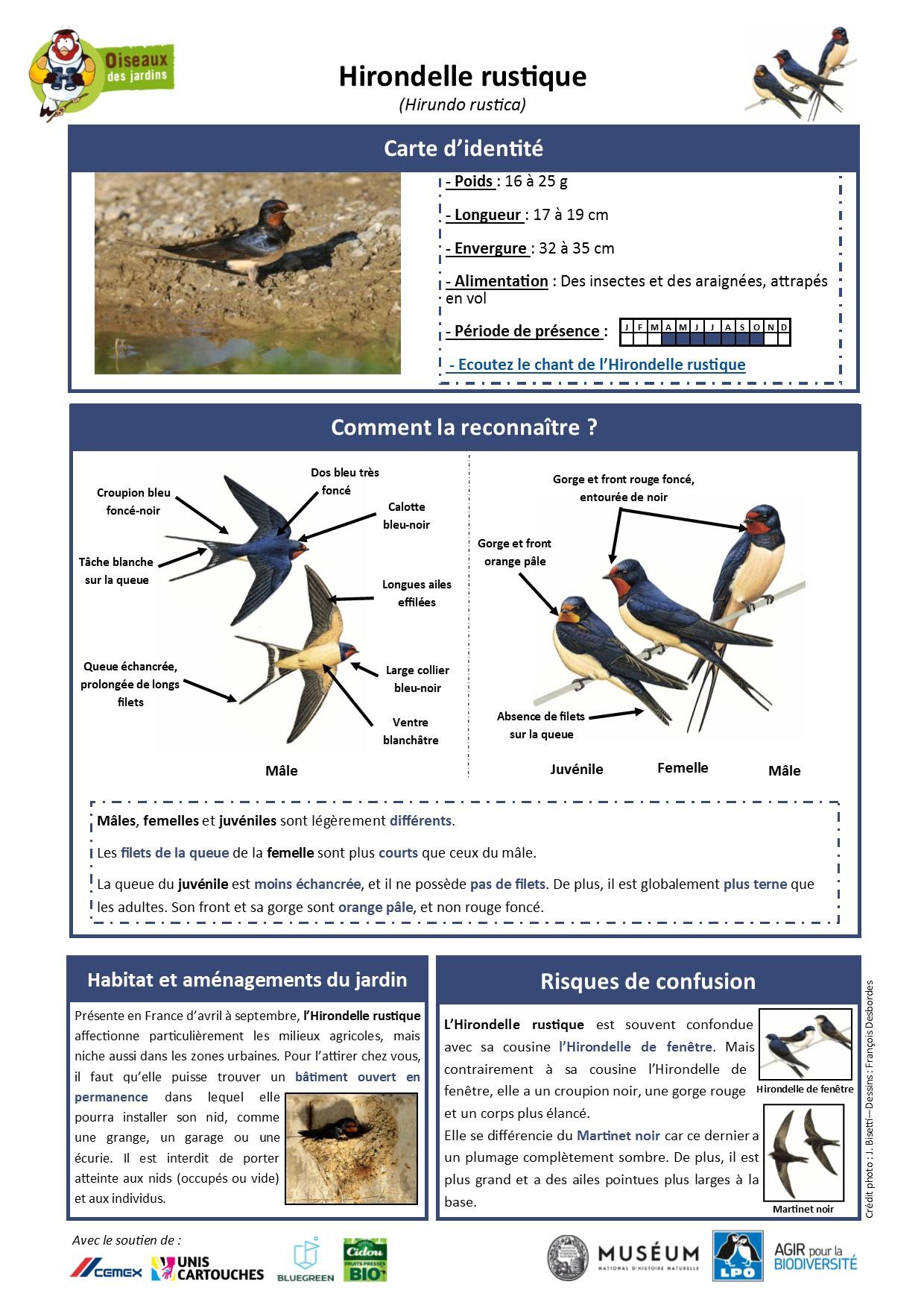 https://cdnfiles2.biolovision.net/www.oiseauxdesjardins.fr/userfiles/Fichesespces/FicheespceHR.pdf