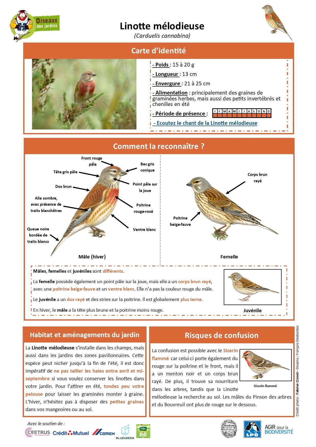https://cdnfiles2.biolovision.net/www.oiseauxdesjardins.fr/userfiles/Fichesespces/FicheespceLM.jpg