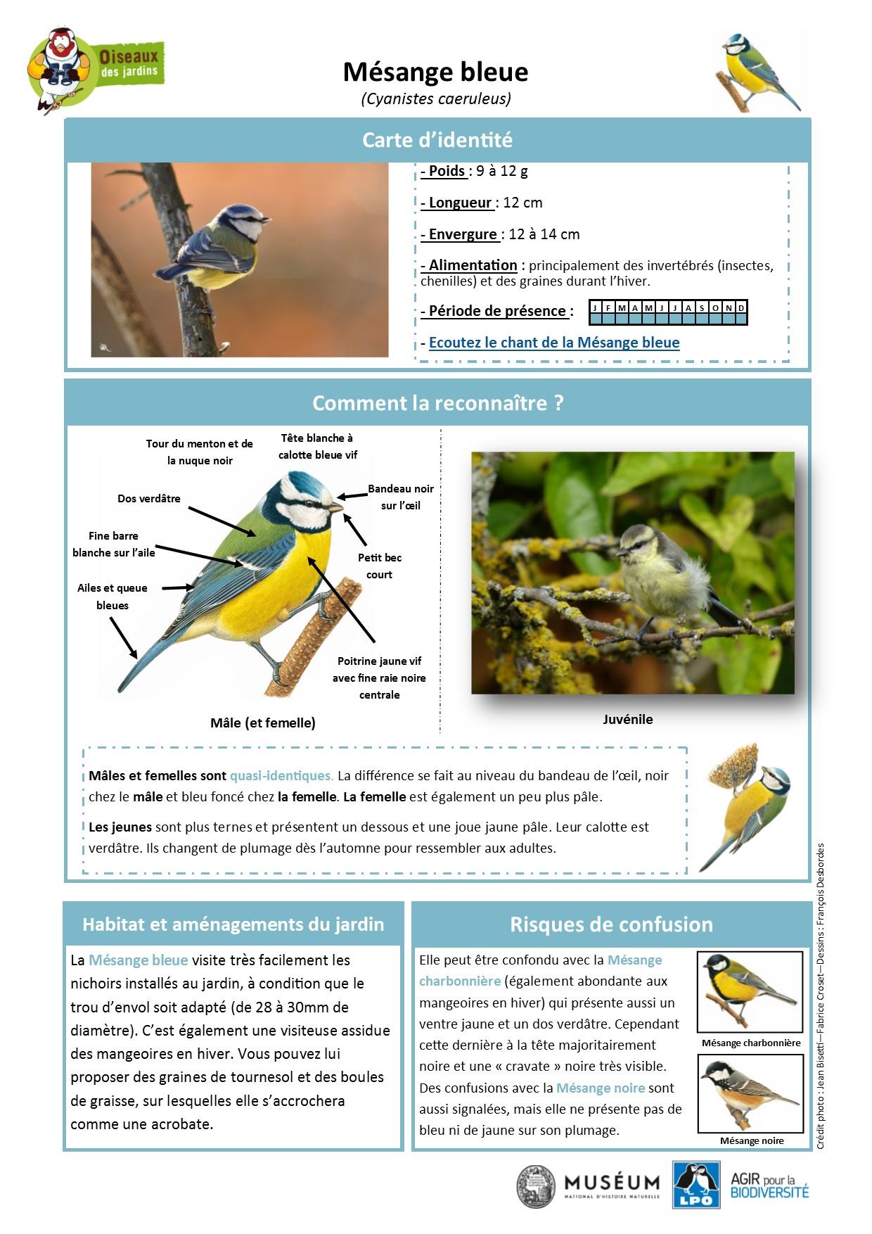https://cdnfiles2.biolovision.net/www.oiseauxdesjardins.fr/userfiles/Fichesespces/FicheespceMB.pdf