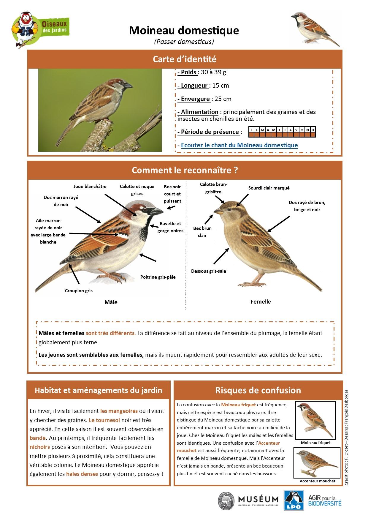 https://cdnfiles2.biolovision.net/www.oiseauxdesjardins.fr/userfiles/Fichesespces/FicheespceMD.pdf