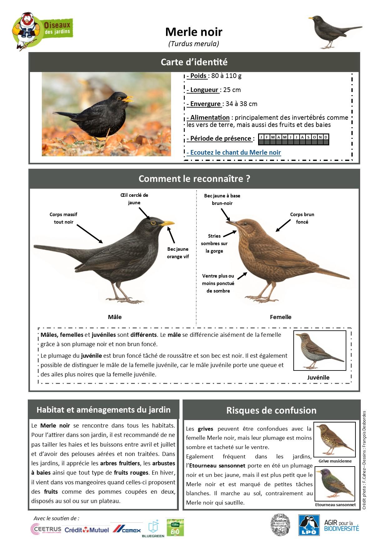 https://cdnfiles2.biolovision.net/www.oiseauxdesjardins.fr/userfiles/Fichesespces/FicheespceMERLEN.jpg