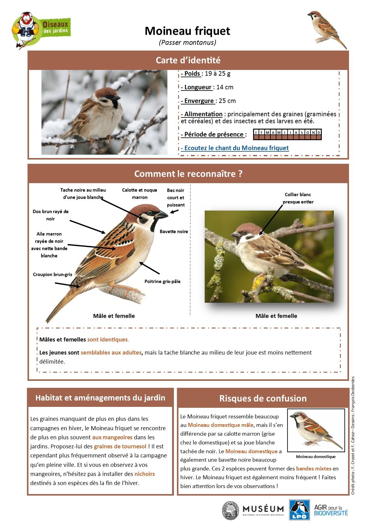 https://cdnfiles2.biolovision.net/www.oiseauxdesjardins.fr/userfiles/Fichesespces/FicheespceMF.pdf