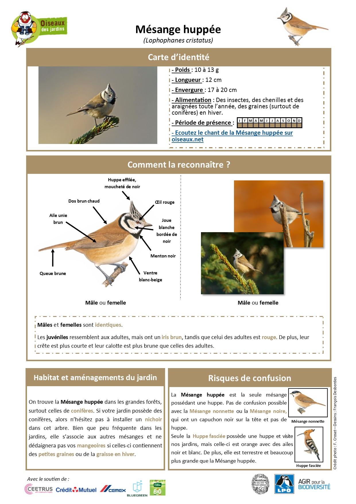 https://cdnfiles2.biolovision.net/www.oiseauxdesjardins.fr/userfiles/Fichesespces/FicheespceMHv2.pdf