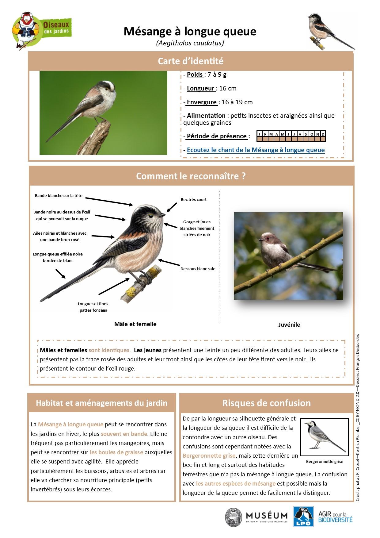 https://cdnfiles2.biolovision.net/www.oiseauxdesjardins.fr/userfiles/Fichesespces/FicheespceMLQ.pdf