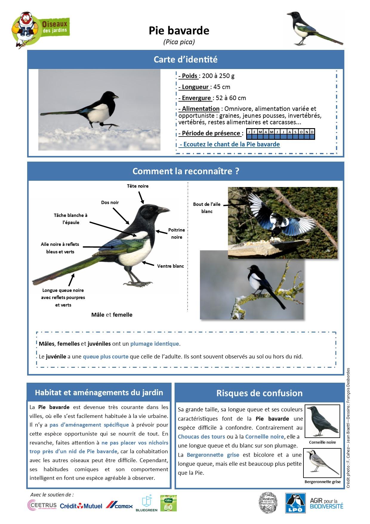 https://cdnfiles2.biolovision.net/www.oiseauxdesjardins.fr/userfiles/Fichesespces/FicheespcePB.jpg