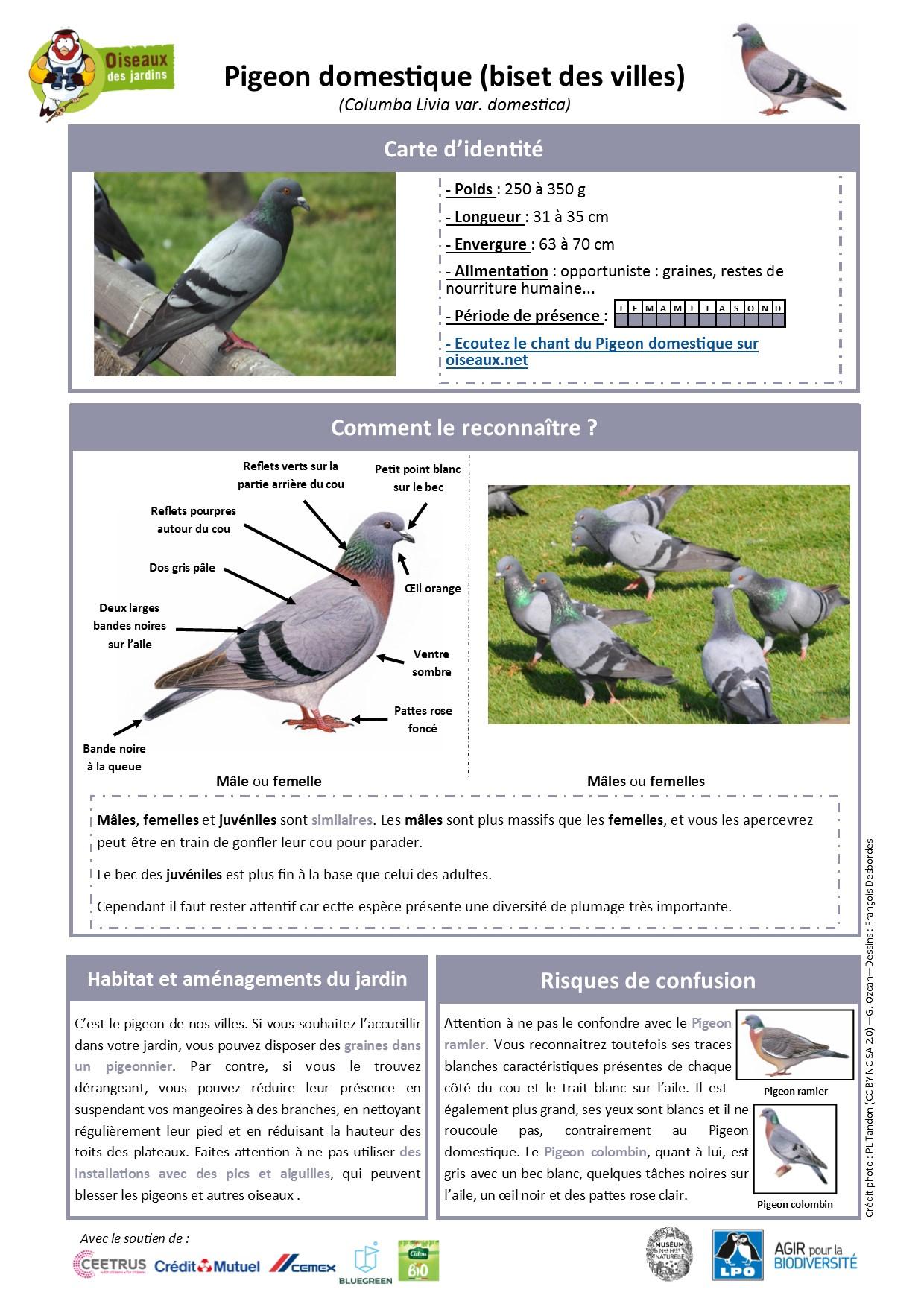 https://cdnfiles2.biolovision.net/www.oiseauxdesjardins.fr/userfiles/Fichesespces/FicheespcePD.pdf