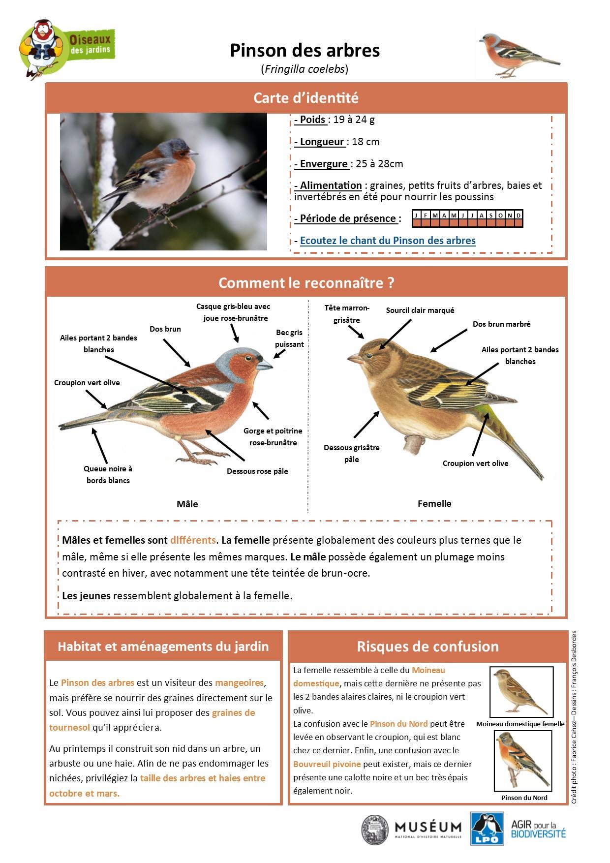 https://cdnfiles2.biolovision.net/www.oiseauxdesjardins.fr/userfiles/Fichesespces/FicheespcePDA.pdf