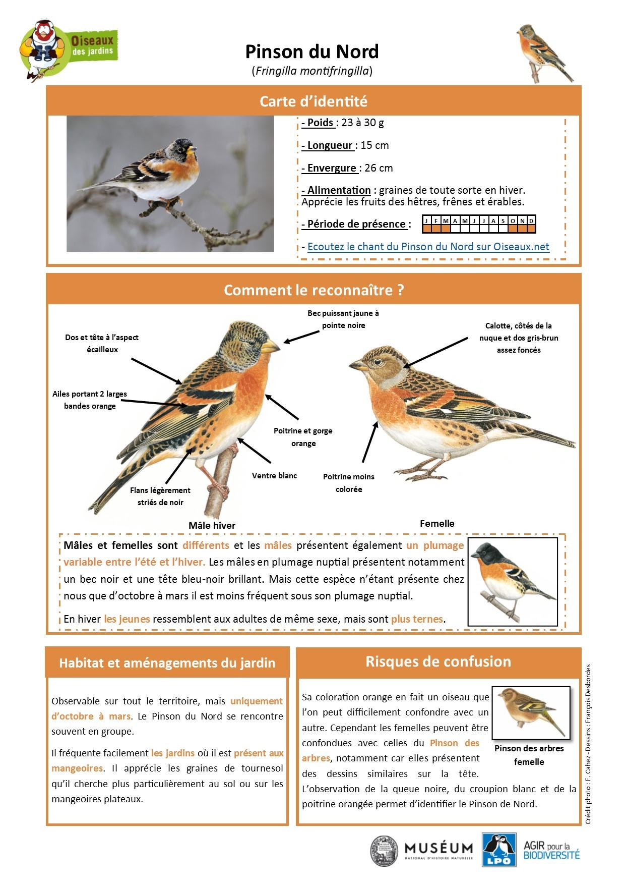 https://cdnfiles2.biolovision.net/www.oiseauxdesjardins.fr/userfiles/Fichesespces/FicheespcePDN.pdf