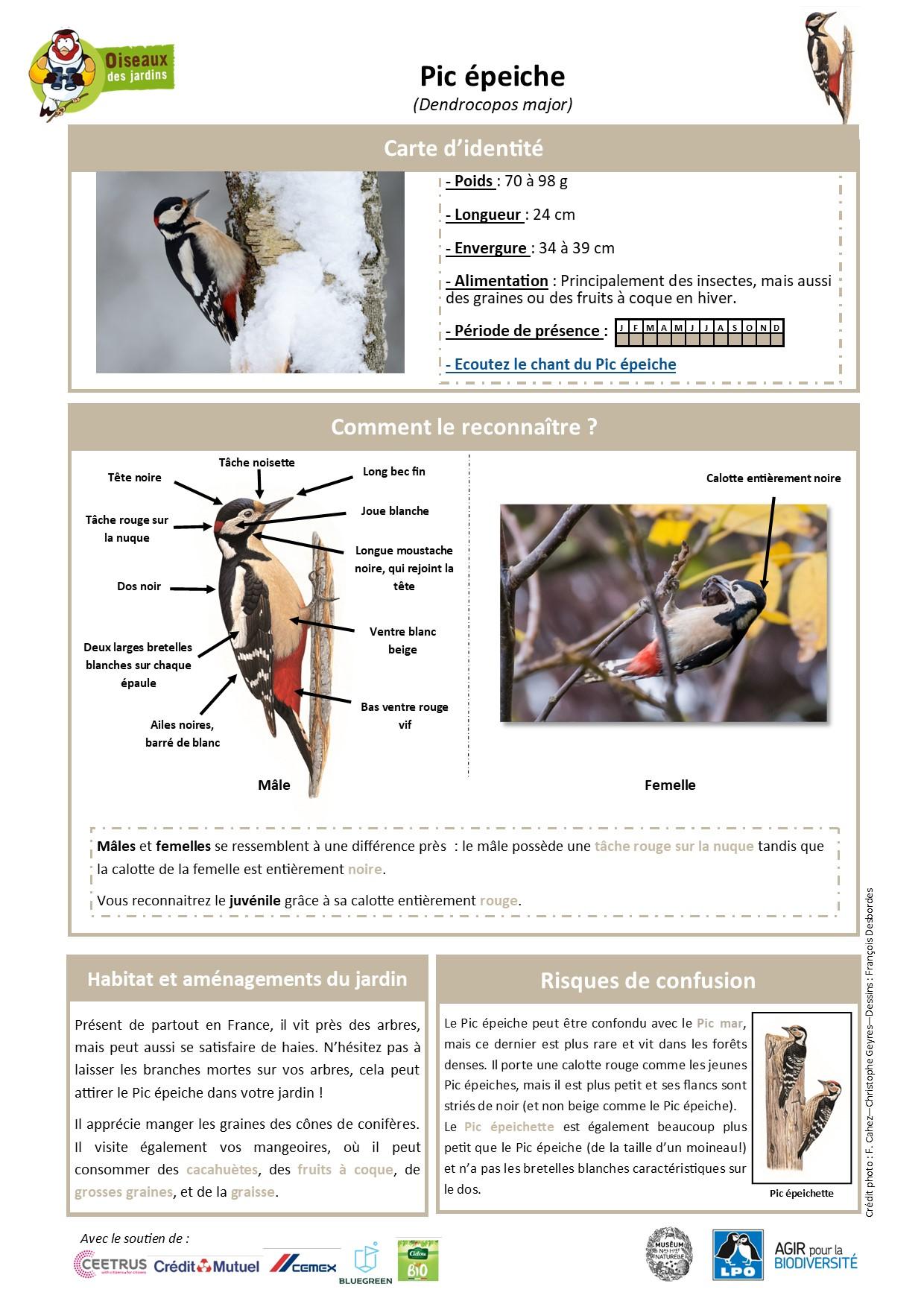 https://cdnfiles2.biolovision.net/www.oiseauxdesjardins.fr/userfiles/Fichesespces/FicheespcePE.jpg