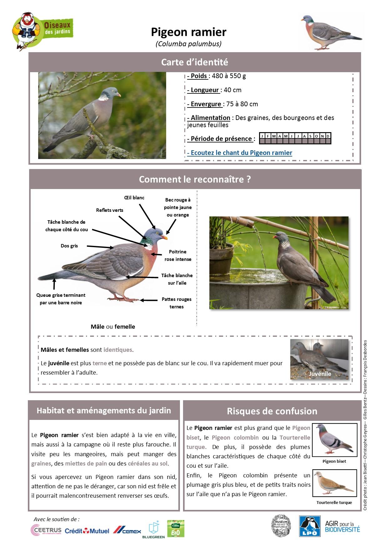 https://cdnfiles2.biolovision.net/www.oiseauxdesjardins.fr/userfiles/Fichesespces/FicheespcePR.pdf