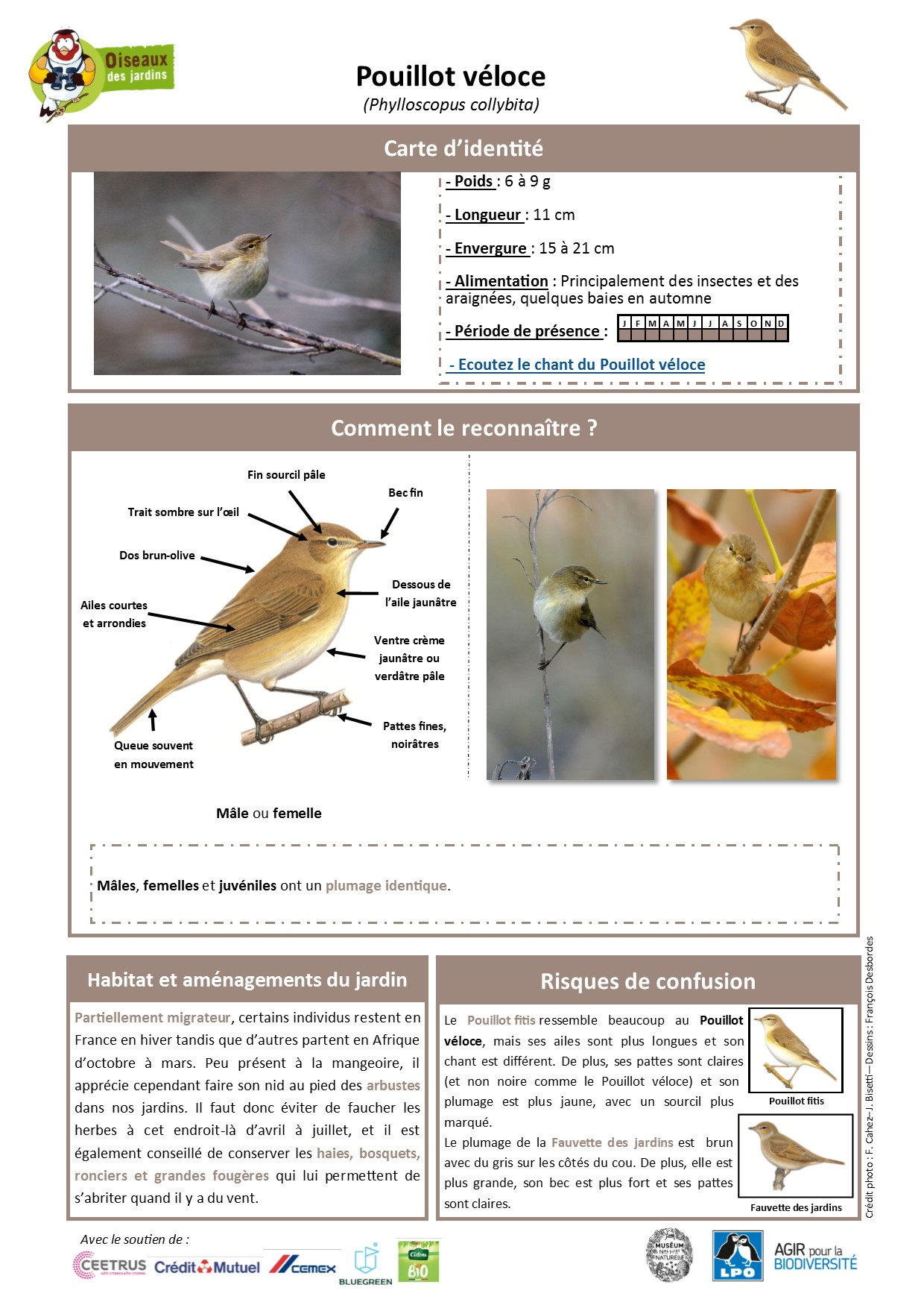 https://cdnfiles2.biolovision.net/www.oiseauxdesjardins.fr/userfiles/Fichesespces/FicheespcePVEL.jpg