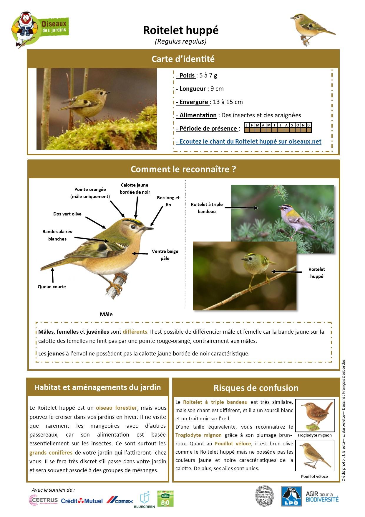 https://cdnfiles2.biolovision.net/www.oiseauxdesjardins.fr/userfiles/Fichesespces/FicheespceRHcompress.jpg