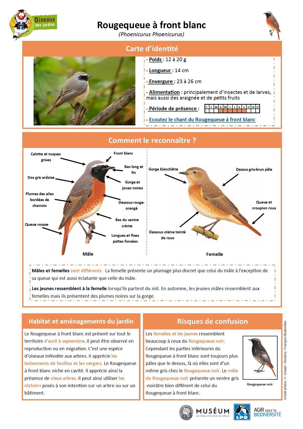https://cdnfiles2.biolovision.net/www.oiseauxdesjardins.fr/userfiles/Fichesespces/FicheespceRQFB.pdf