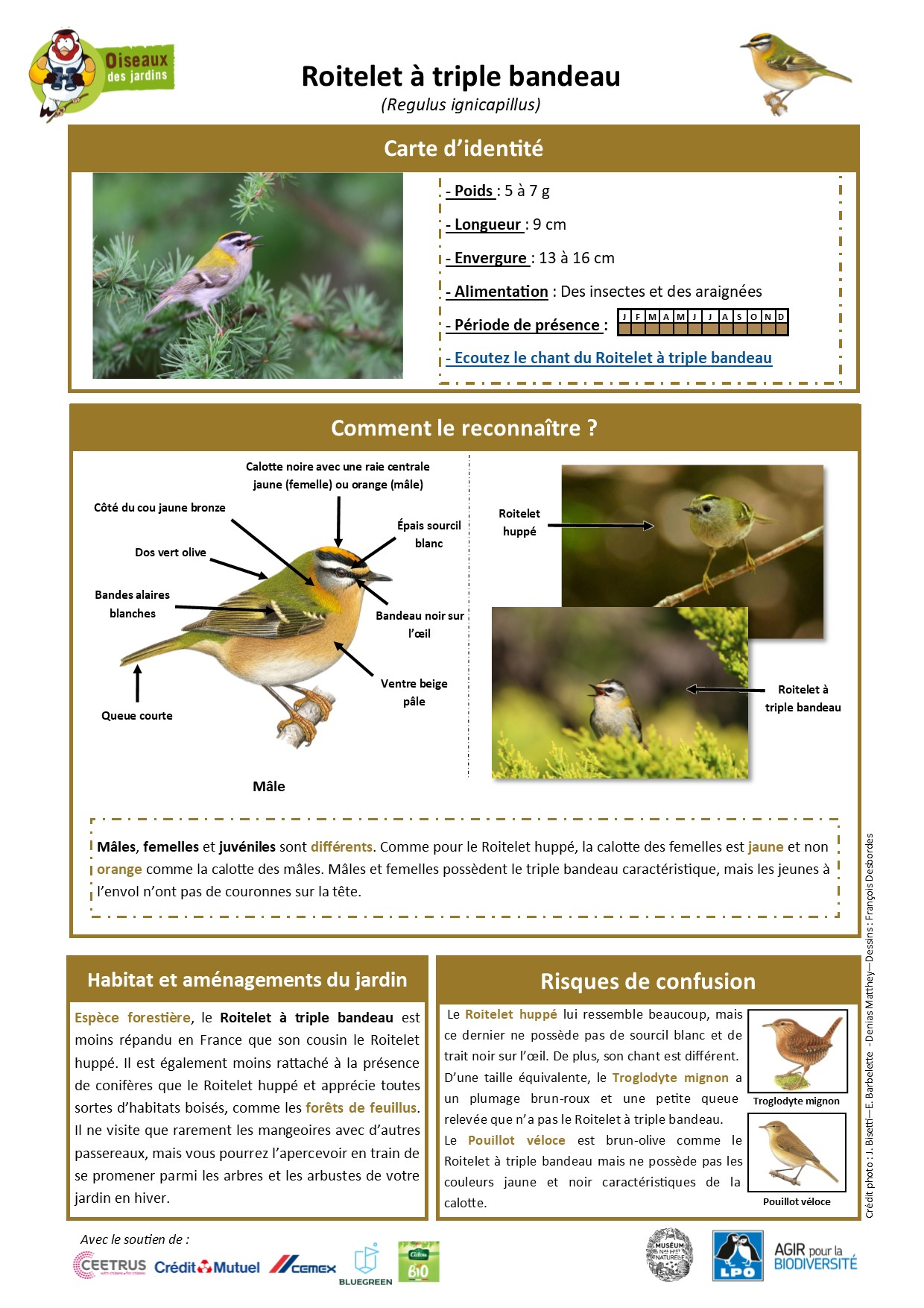 https://cdnfiles2.biolovision.net/www.oiseauxdesjardins.fr/userfiles/Fichesespces/FicheespceRTB.jpg