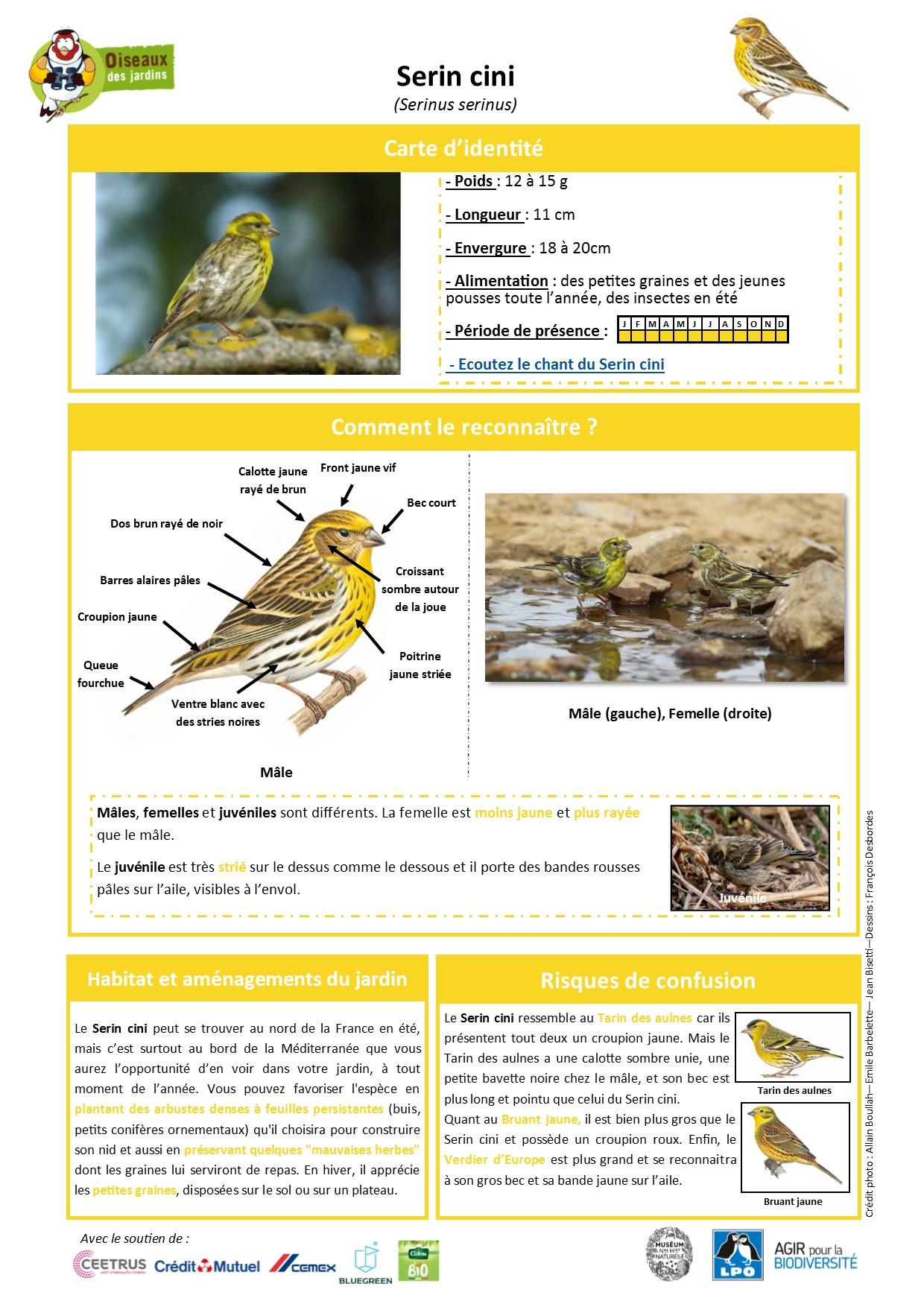 https://cdnfiles2.biolovision.net/www.oiseauxdesjardins.fr/userfiles/Fichesespces/FicheespceSC.jpg