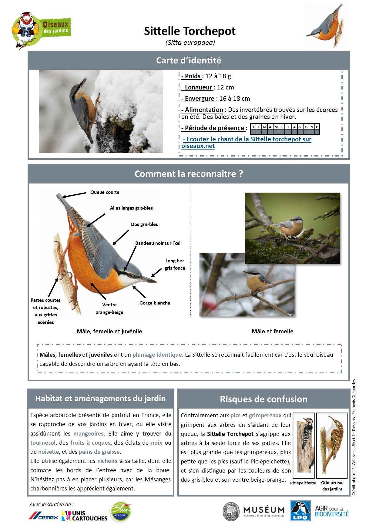 https://cdnfiles2.biolovision.net/www.oiseauxdesjardins.fr/userfiles/Fichesespces/FicheespceST.pdf