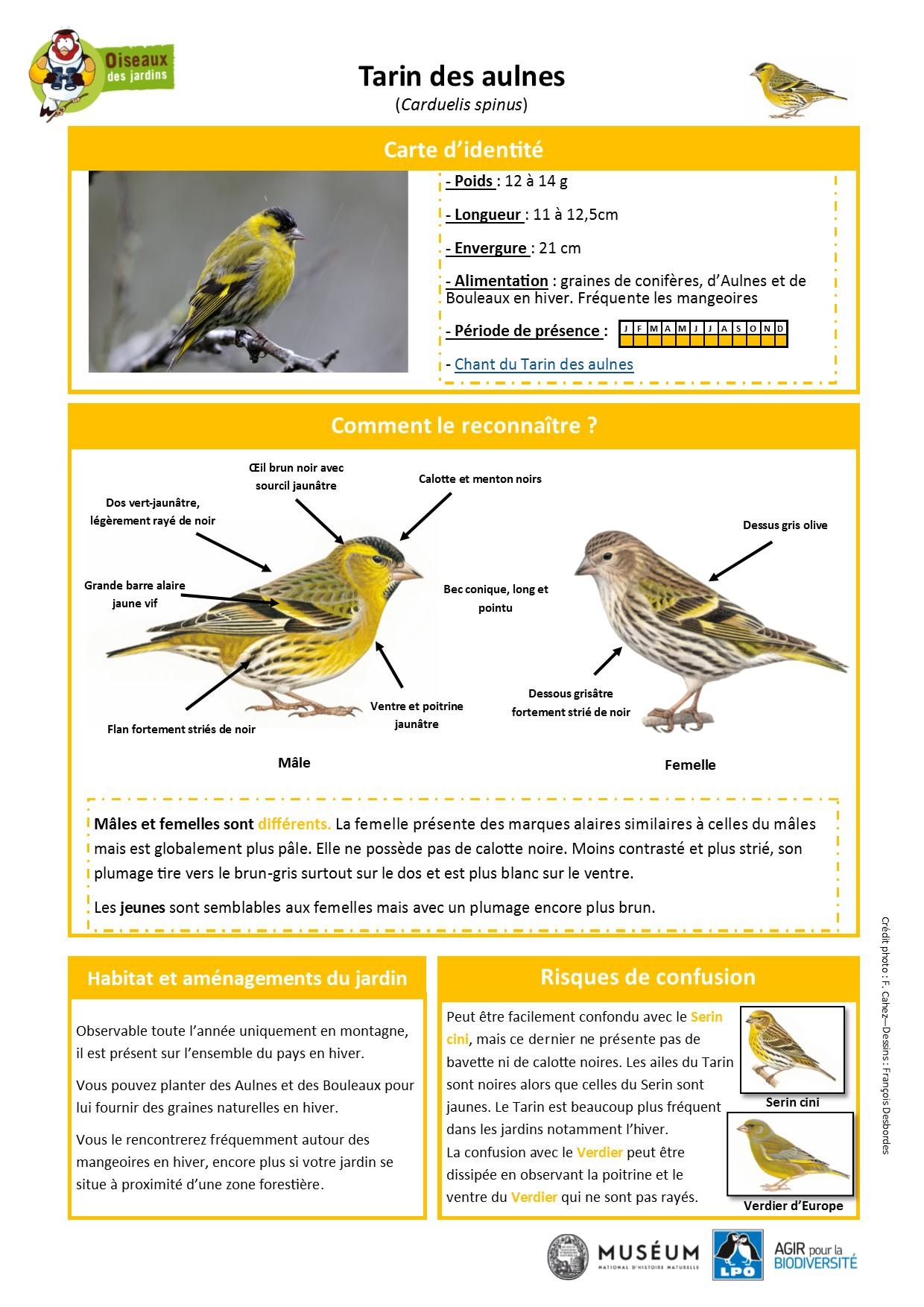 https://cdnfiles2.biolovision.net/www.oiseauxdesjardins.fr/userfiles/Fichesespces/FicheespceTDA.pdf