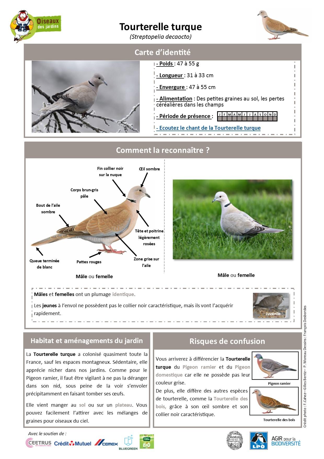 https://cdnfiles2.biolovision.net/www.oiseauxdesjardins.fr/userfiles/Fichesespces/FicheespceTT.pdf