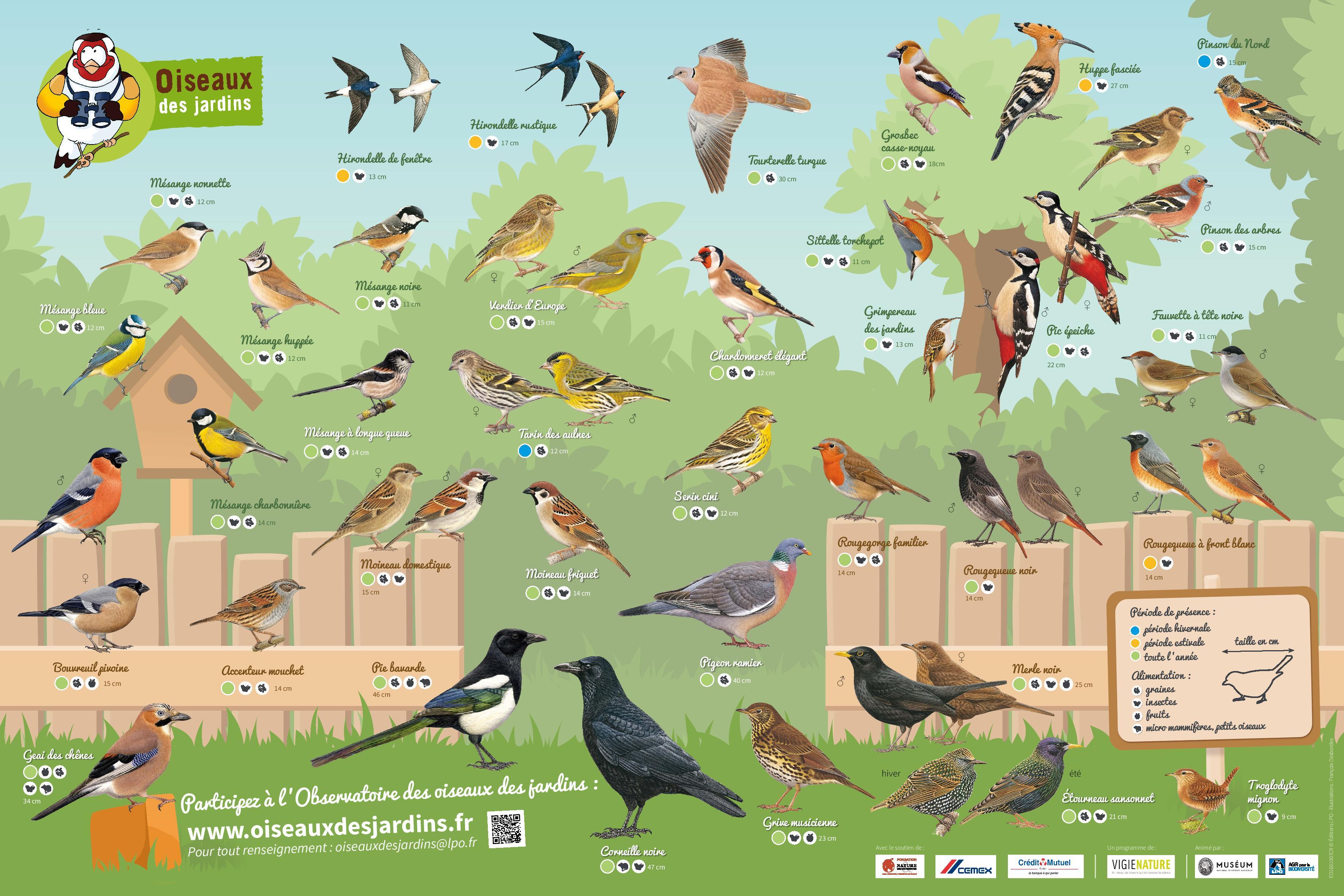 https://cdnfiles2.biolovision.net/www.oiseauxdesjardins.fr/userfiles/PosterODJ2016.jpg