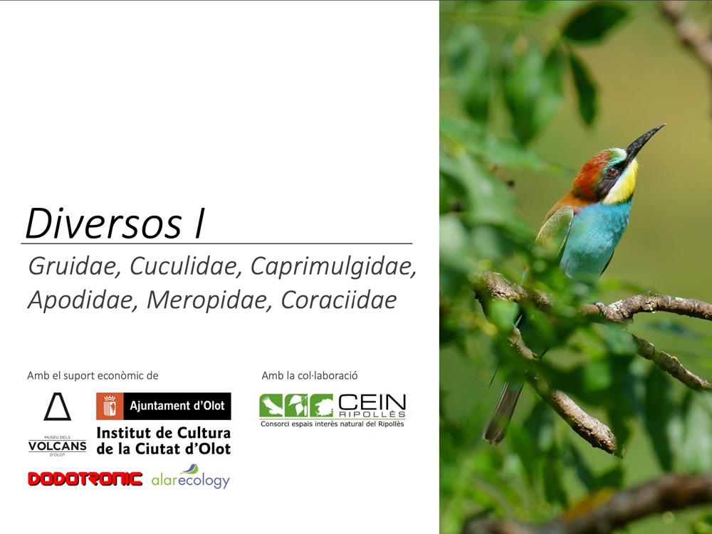 https://cdnfiles2.biolovision.net/www.ornitho.cat/userfiles/Nocmig/DIVERSOSNOPAsseriformes.jpg