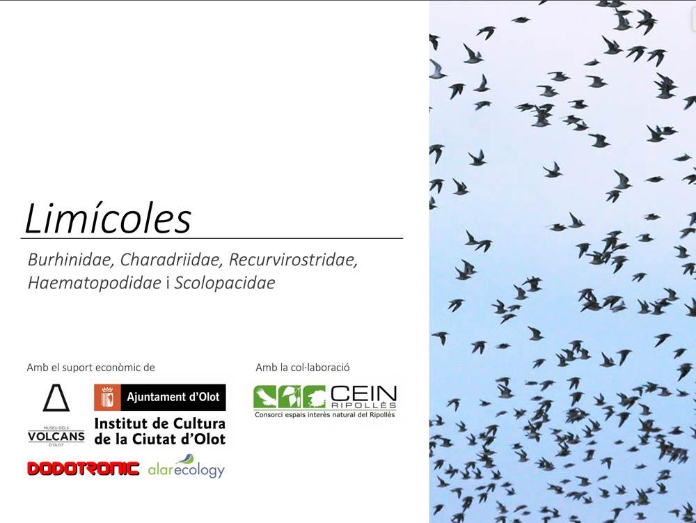 https://cdnfiles2.biolovision.net/www.ornitho.cat/userfiles/Nocmig/LIMICOLES.jpg