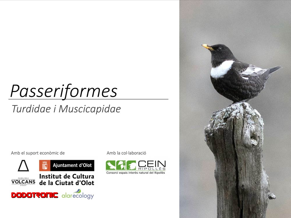 https://cdnfiles2.biolovision.net/www.ornitho.cat/userfiles/Nocmig/TURDIDAE.jpg